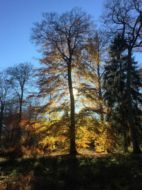 Grande Forêt de Saint-Hubert