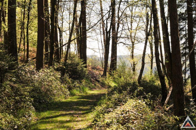 Trail running, une fin en soi