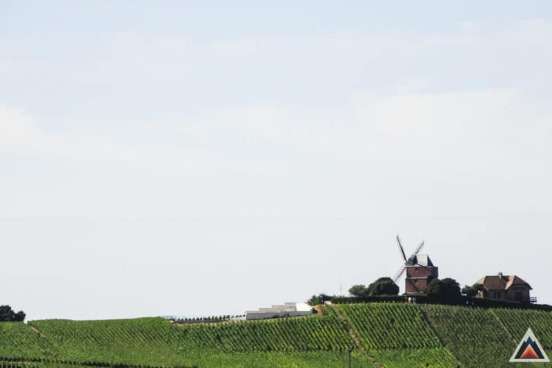 Reims entre sport et vigne