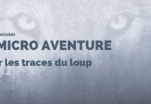 Loup en Ardenne