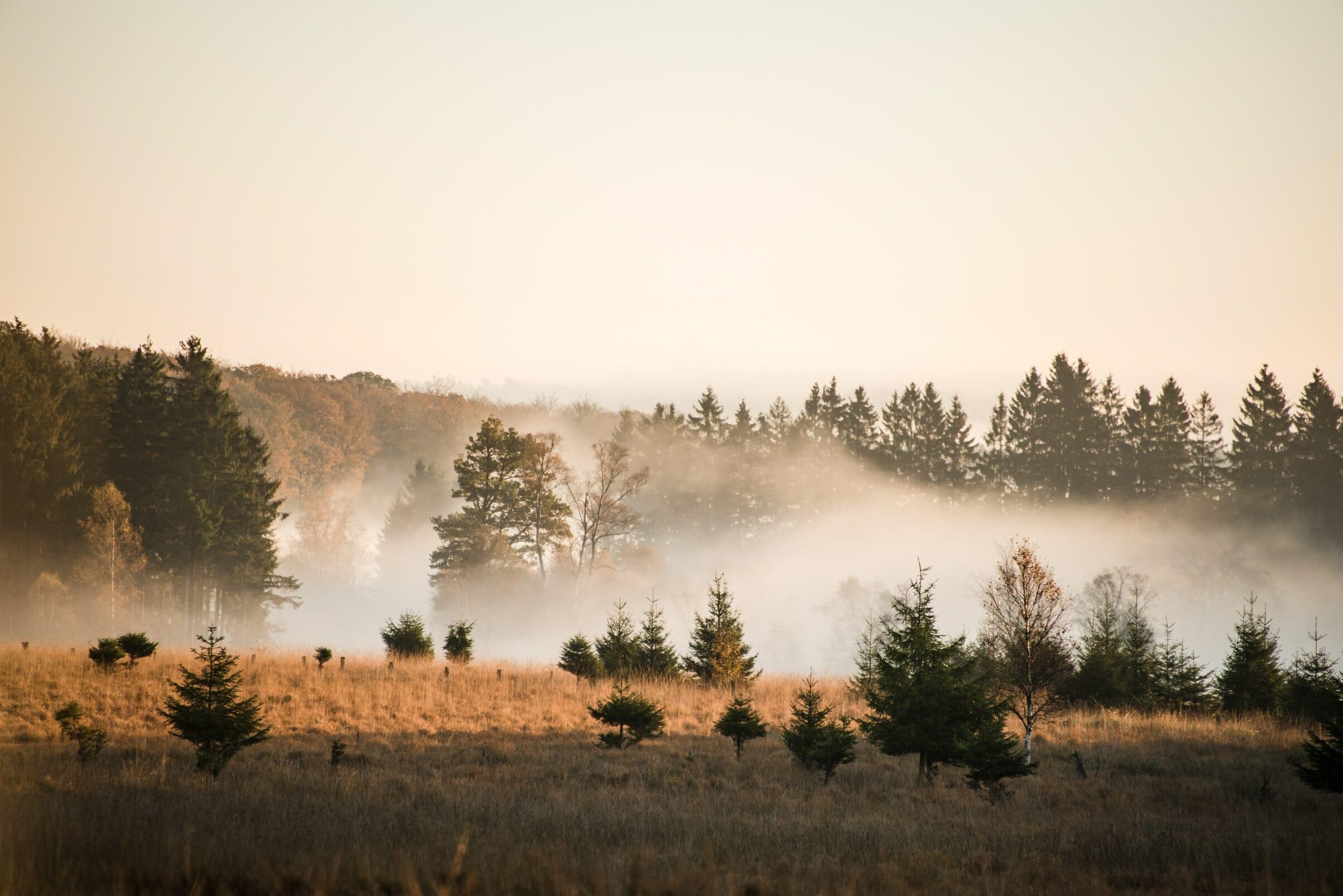 Couleurs d'automne en Ardenne