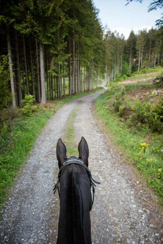 Randonner à cheval en Ardenne