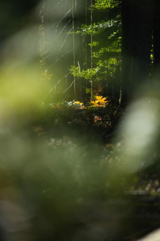 Rando et Bivouac en Ardenne sur le Plateau des Tailles