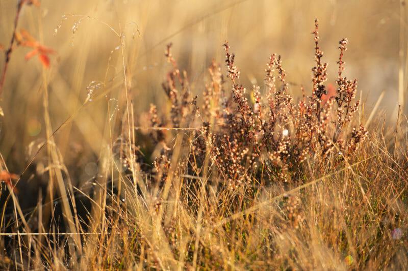 Rando et Bivouac sur le Plateau des Tailles