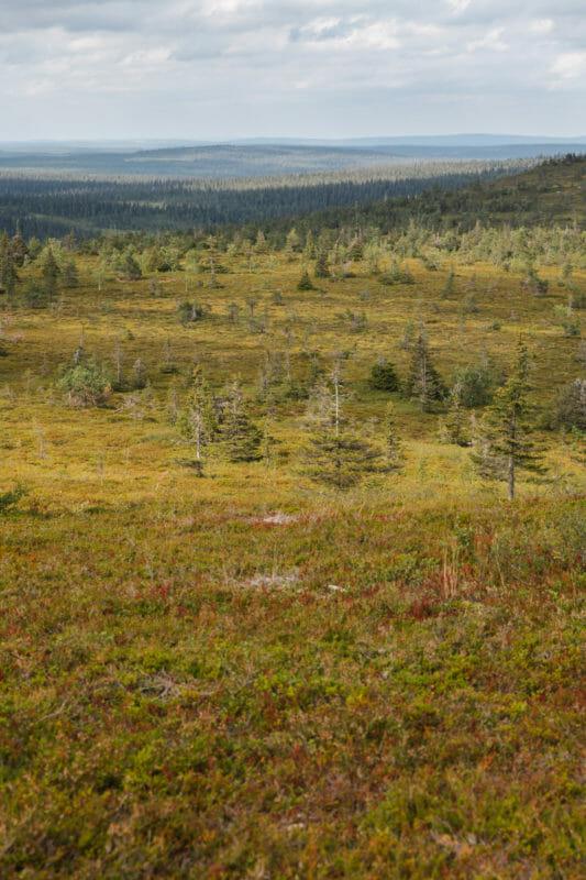 Randonnée dans le parc national de Riisitunturi en Laponie finlandaise
