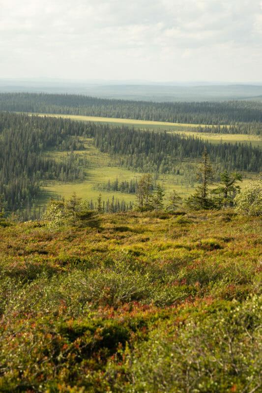 Randonnée dans le parc national de Riisitunturi, randonner dans les parcs nationaux finlandais, Bivouaquer au coeur de la forêt laponne