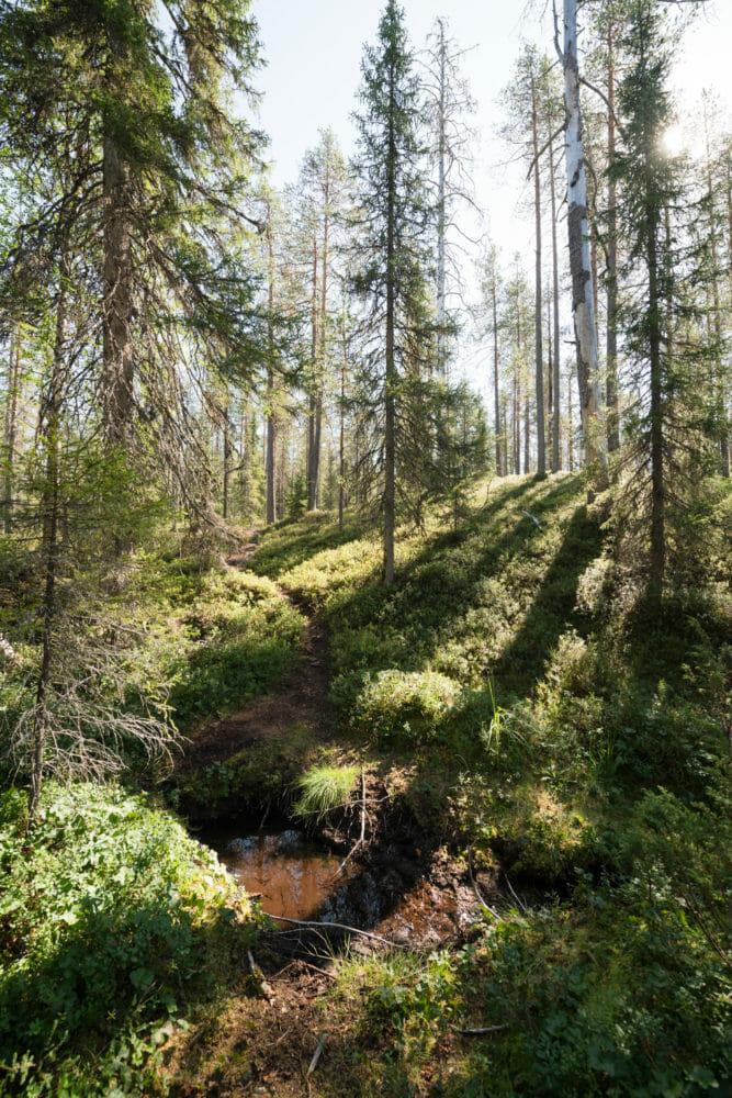 Forêt dans le parc national de Hossa