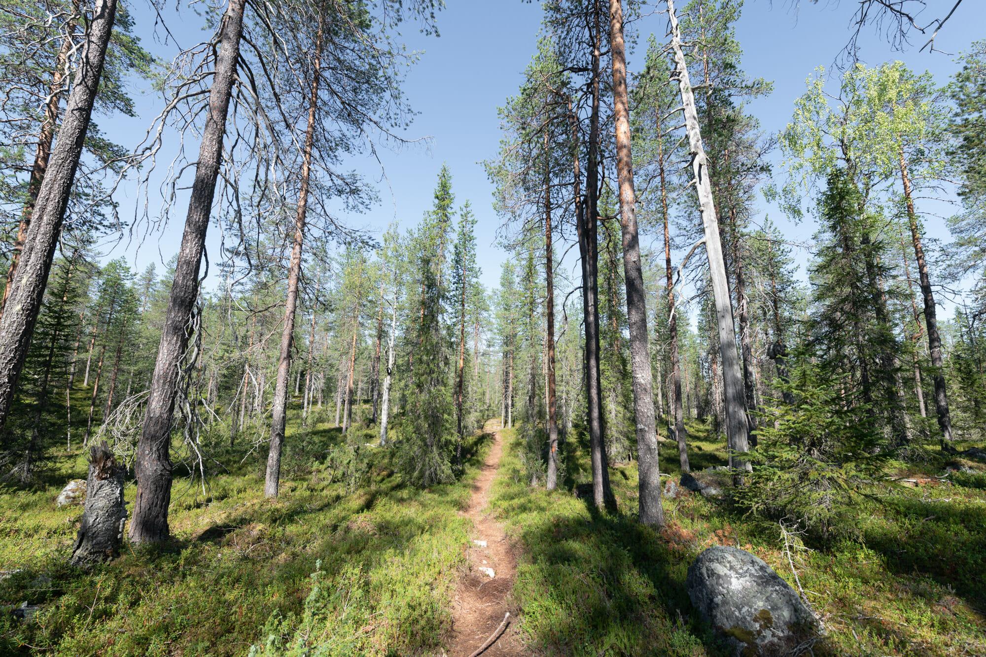 Forêt dans le parc national de Hossa en Laponie finlandaise