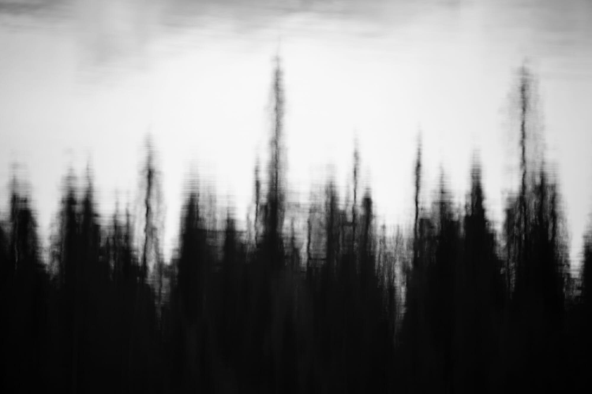 Reflet de la forêt dans le Parc national de Hossa