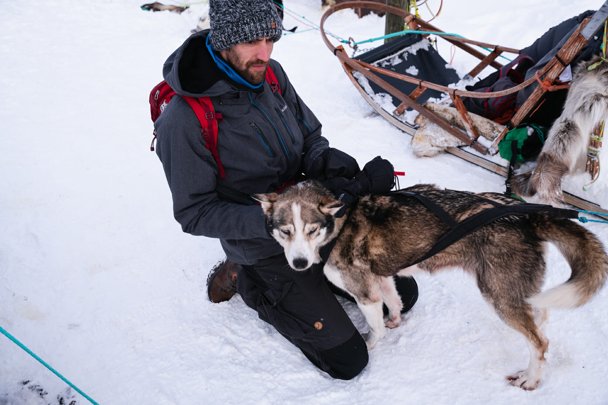 Chien et homme, Tromsø