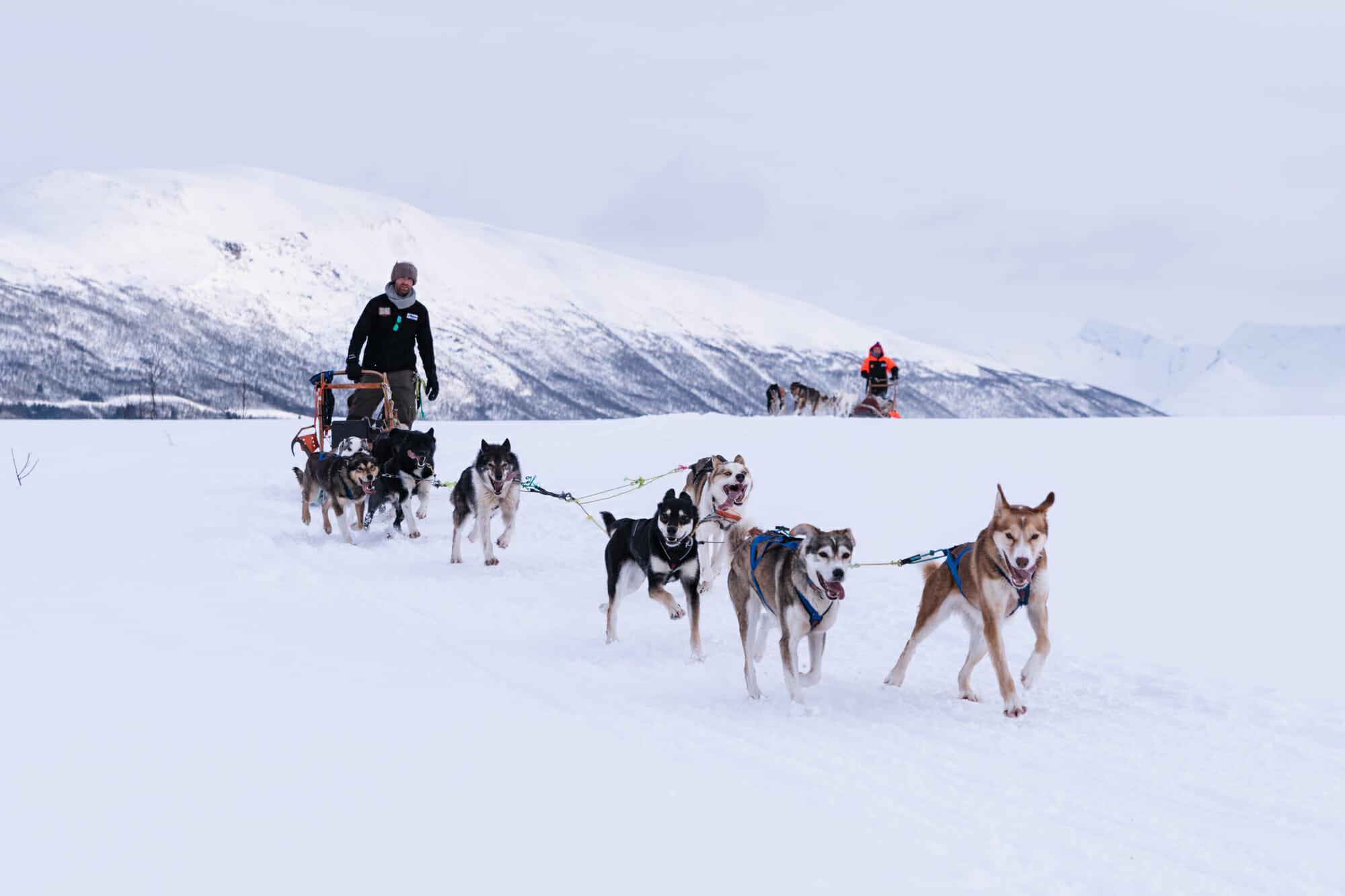 Chien et traineau près de Tromsø