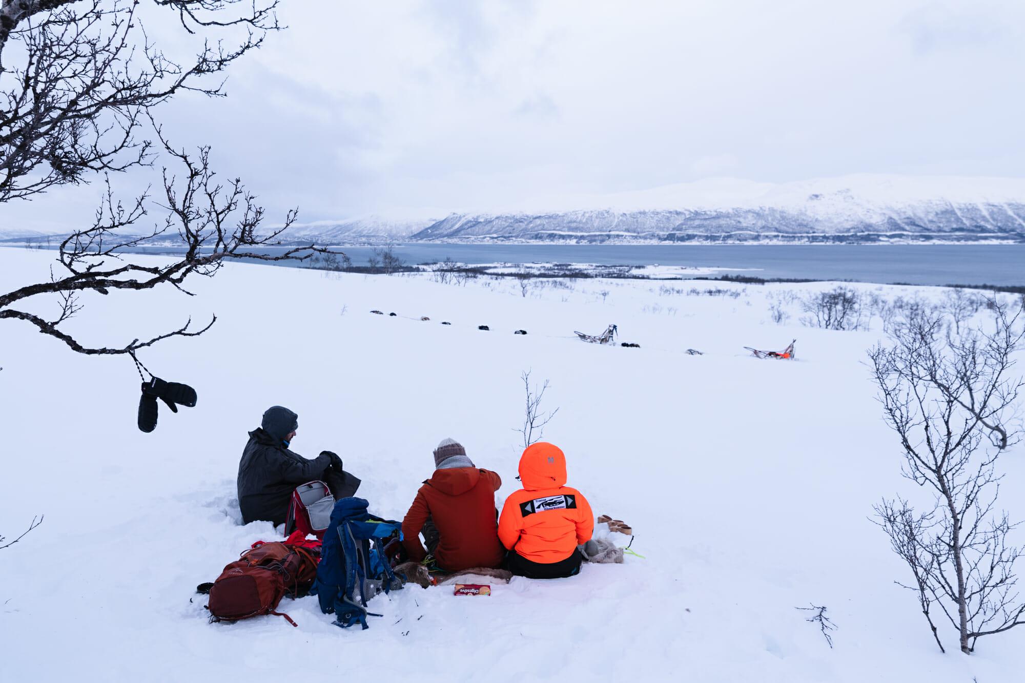 Chien de traineau en Norvège du Nord