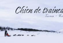 Une journée de chien de traineau à Tromso