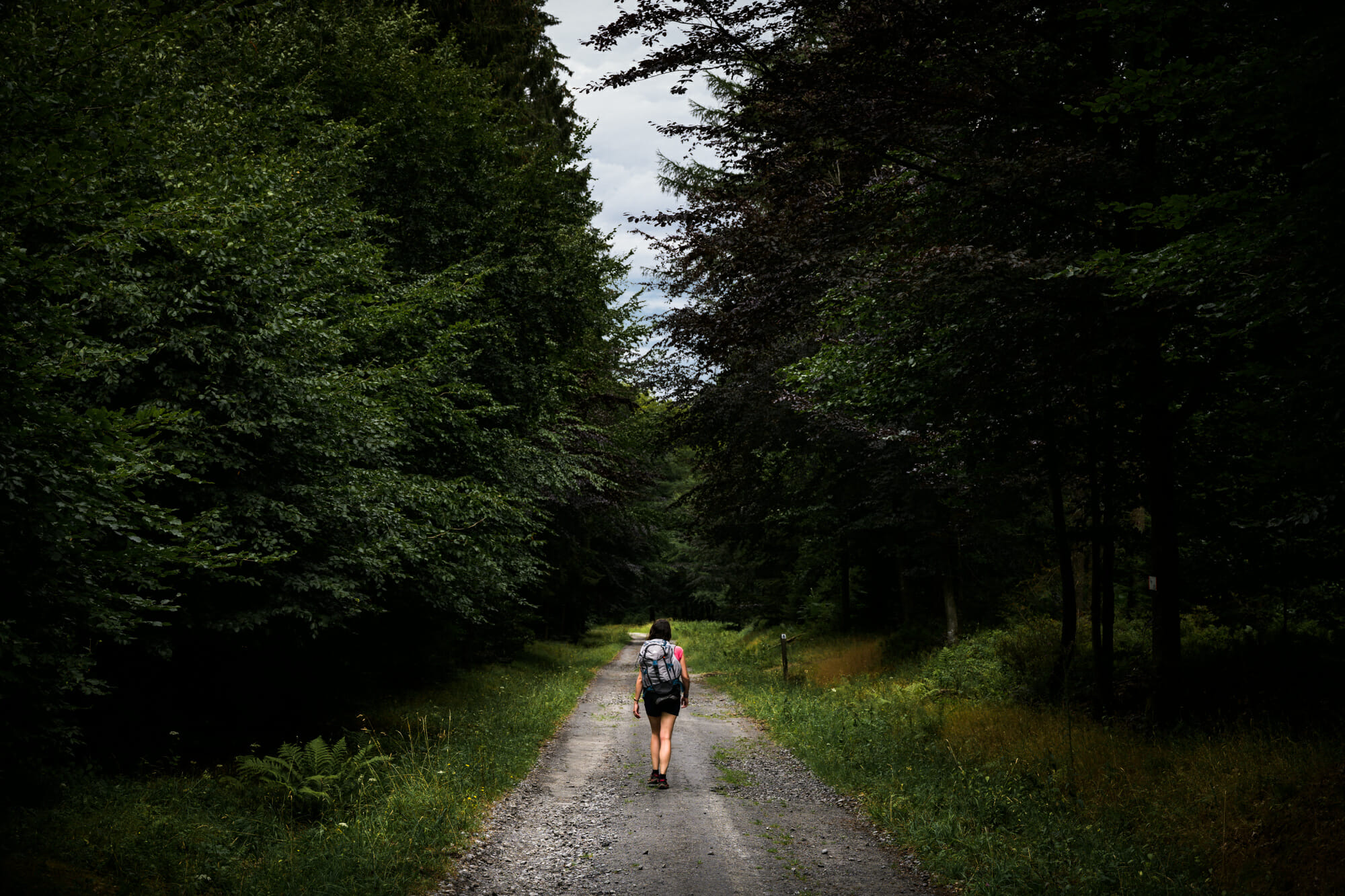 Chemin forestier en Ardenne namuroise Croix Scaille en Ardenne namuroise (en Province de Namur)
