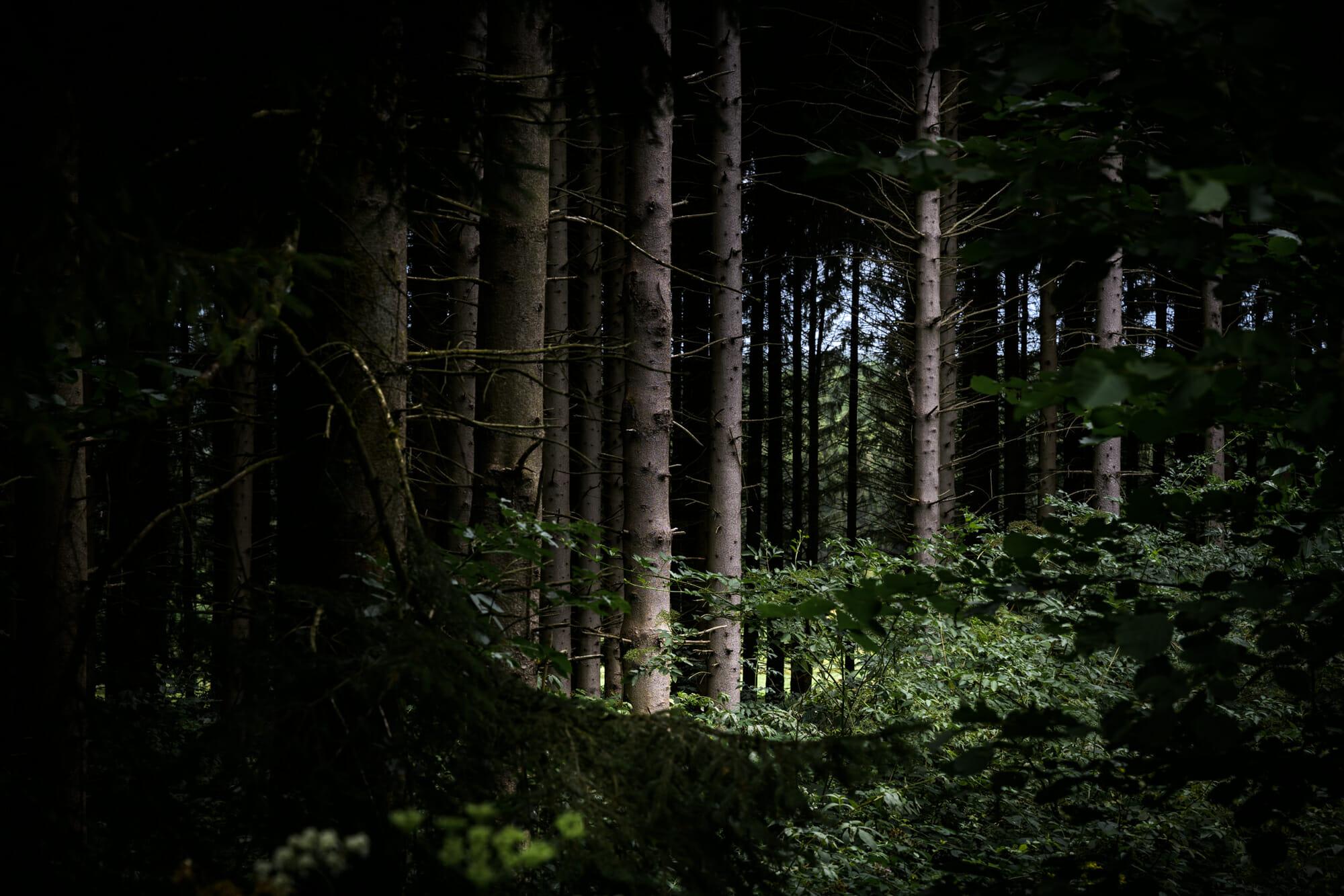 Sombre forêt d'Ardenne en Province de Namur