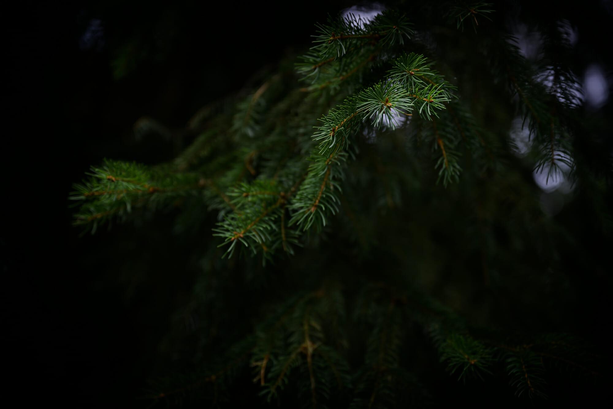 Au coeur de la forêt en Province de Namur