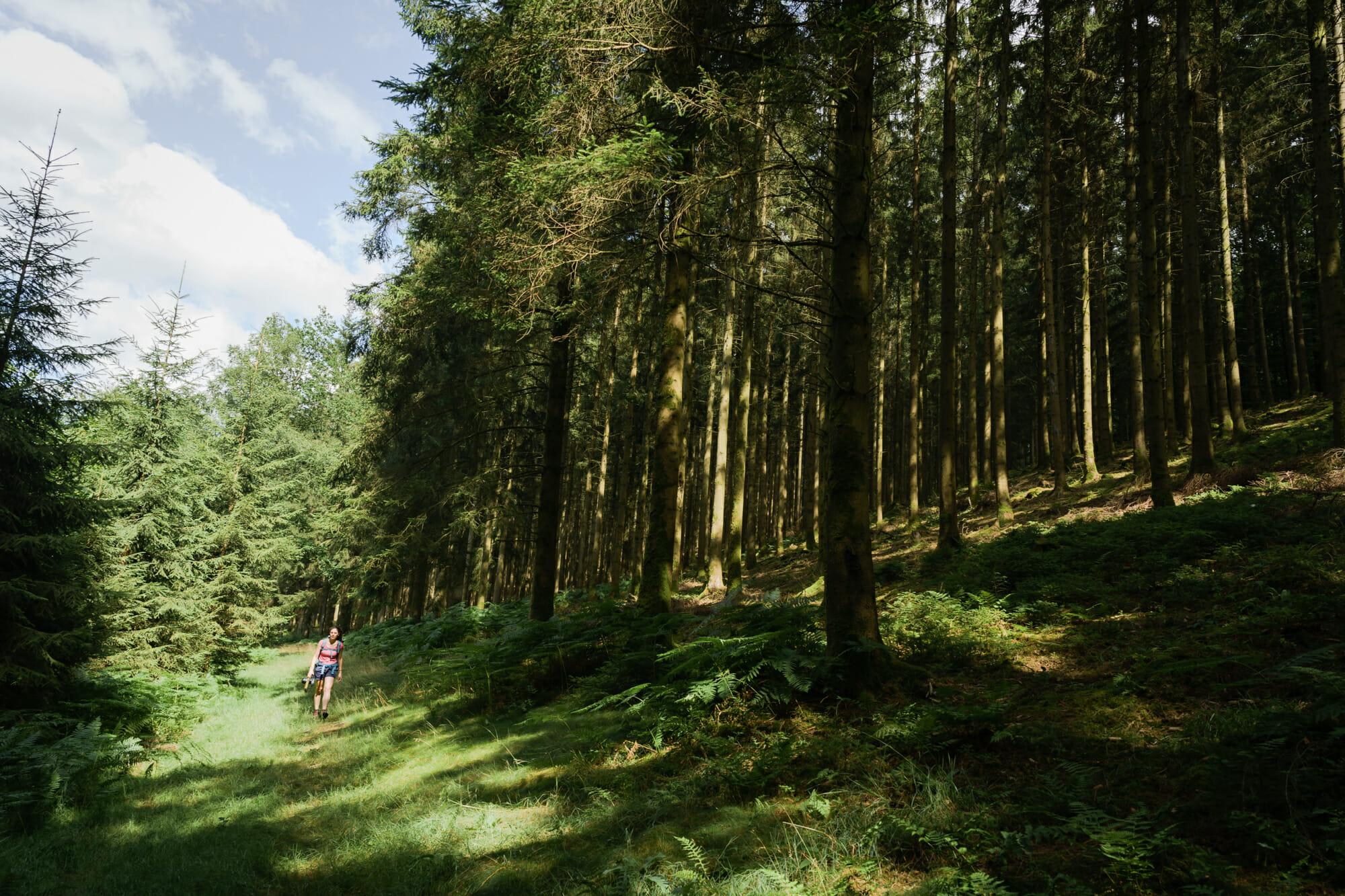 Randonneuse dans le massif de la Croix Scaille en Ardenne namuroise (Province de Namur)
