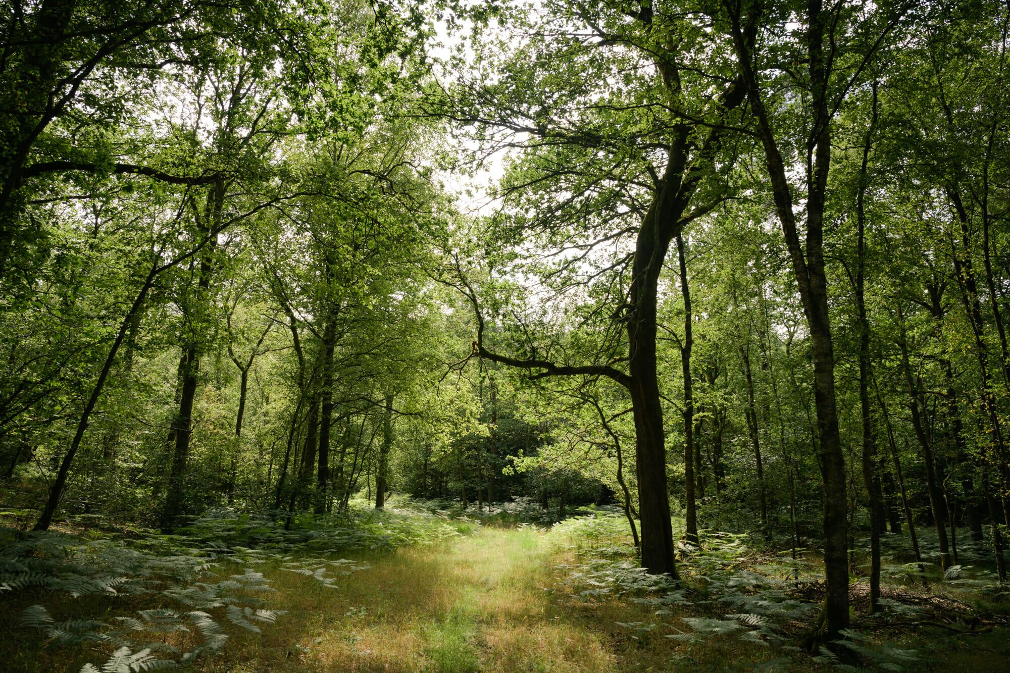 Forêt d'Ardenne en Province de Namur