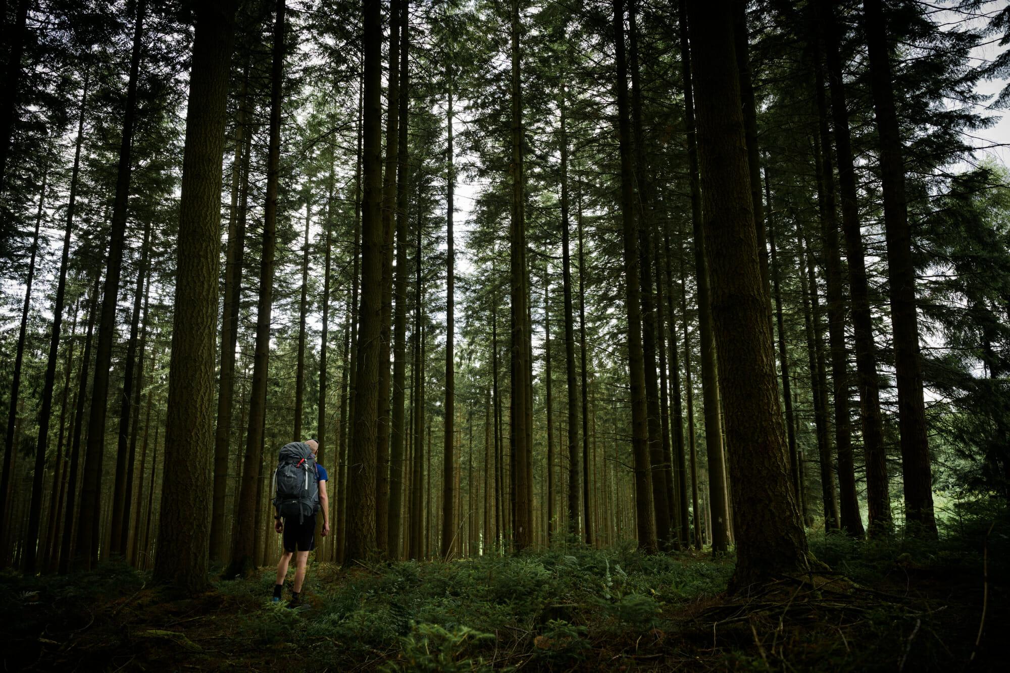 Randonneur dans les bois de la Croix Scaille en Ardenne namuroise (en Province de Namur)