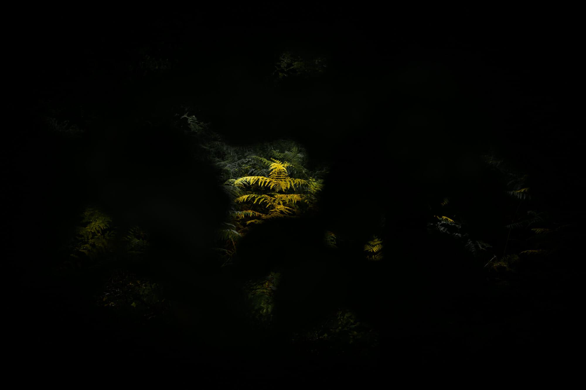 Lumière dans les ténèbres en Province de Namur - Ardenne namuroise