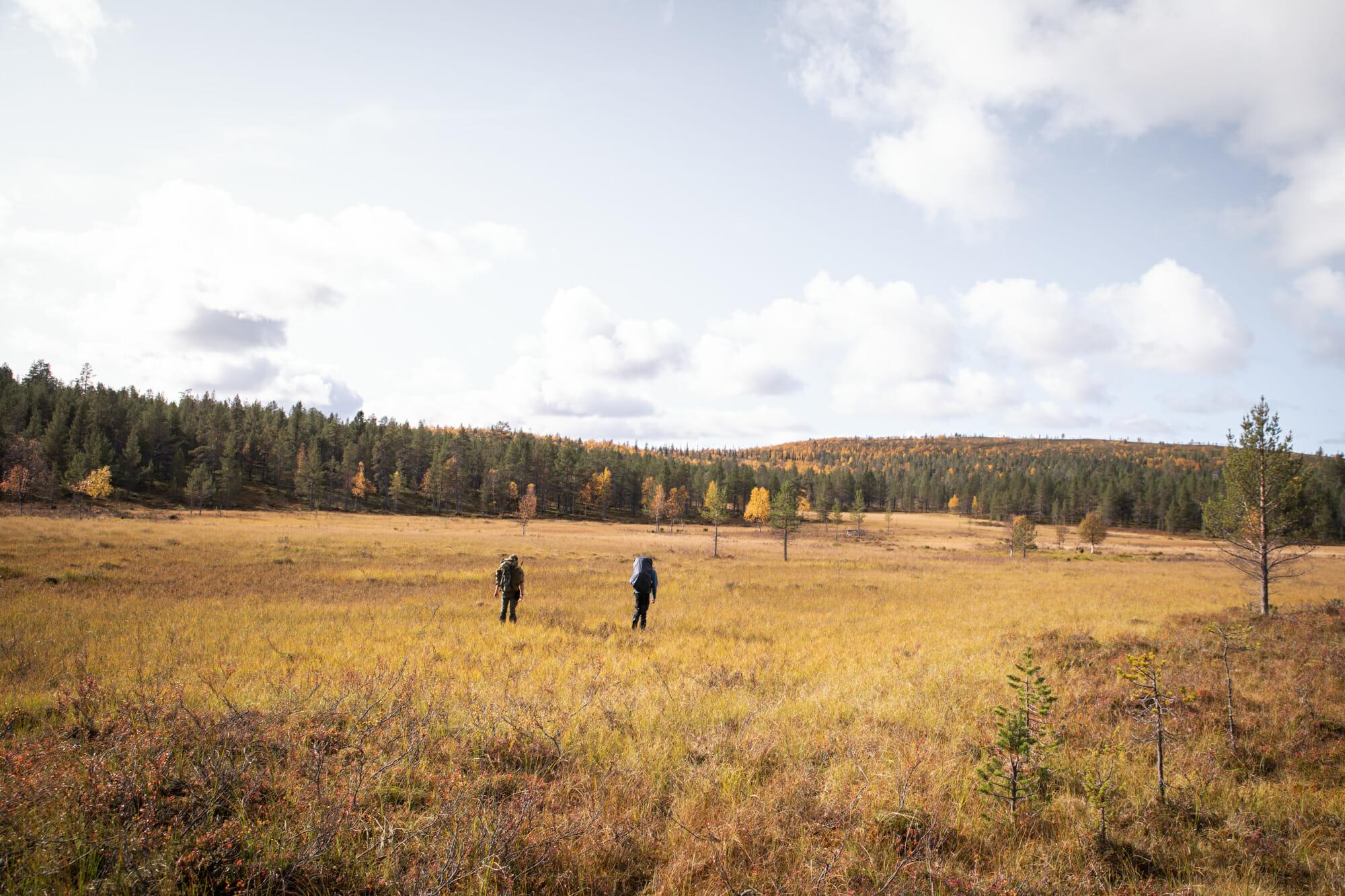 Marais dans la zone sauvage d'Hammastunturi