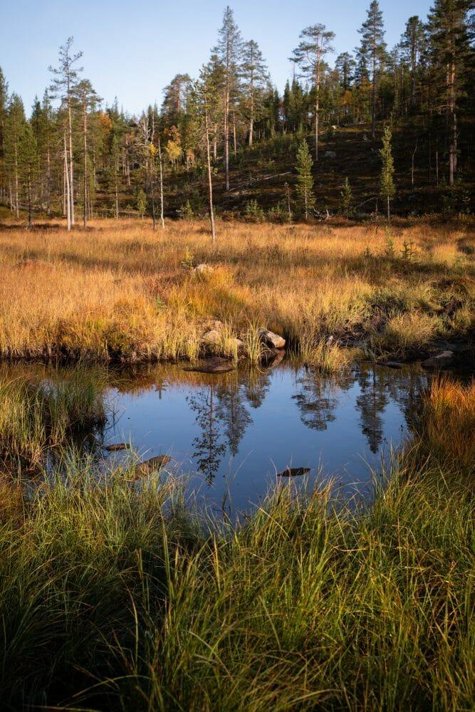 Marais en Laponie finlandaise