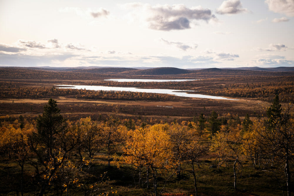 Panorama dans la zone sauvage d'Hammastunturi