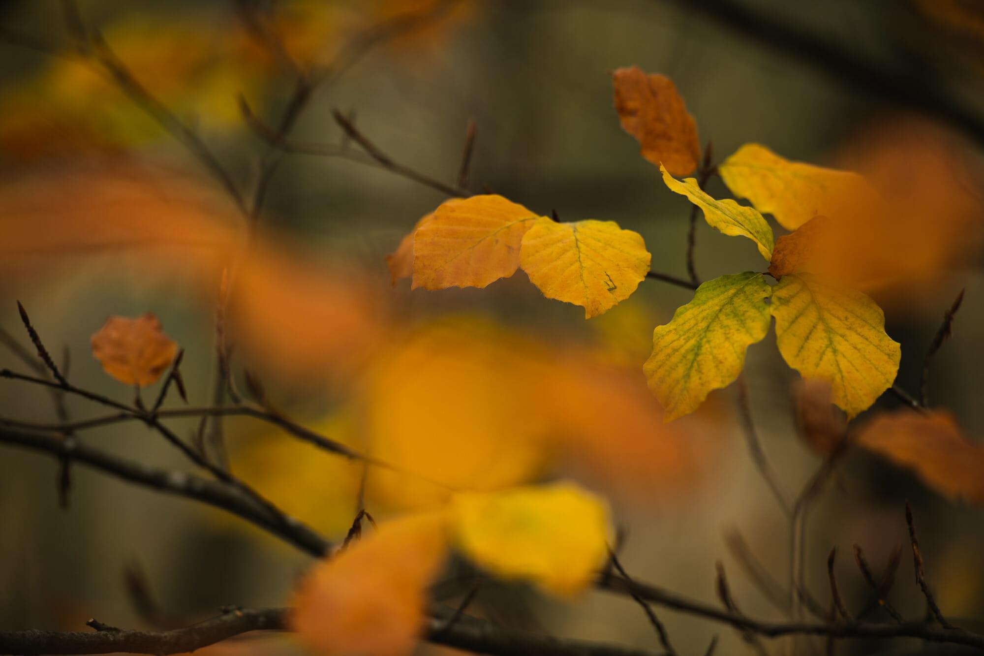 Feuille en automne