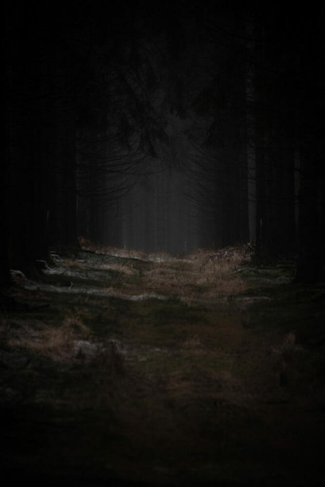 Lugubre Forêt en Ardenne
