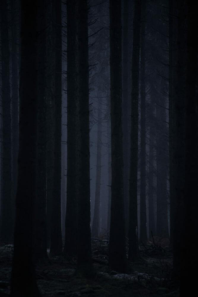 Forêt Ardenne