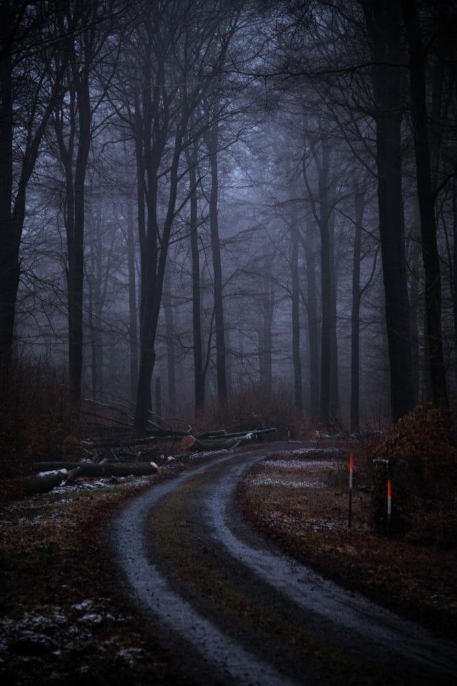 Chemin forestier en Ardenne