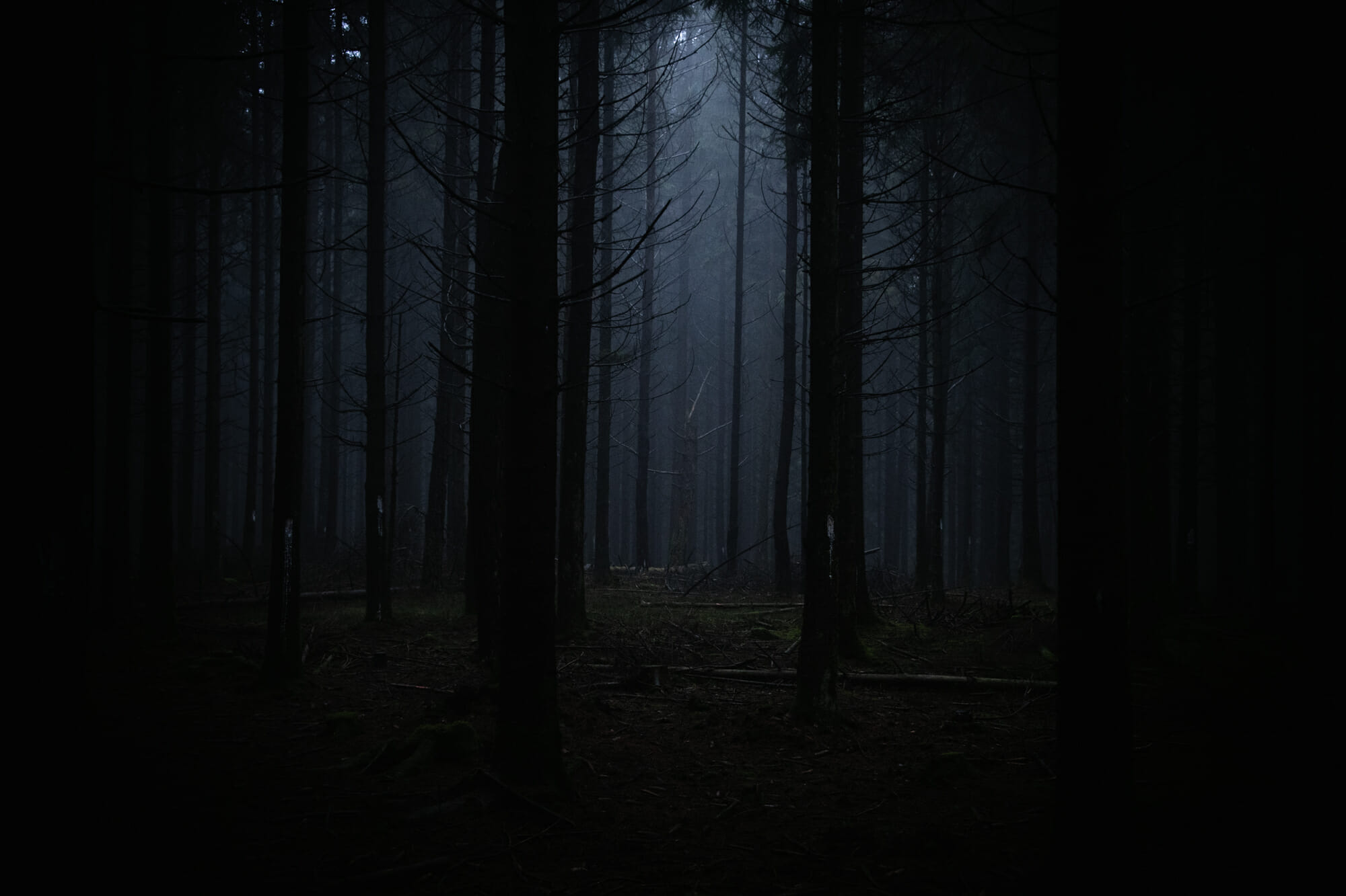 Dans les sombres forêts d'Ardenne