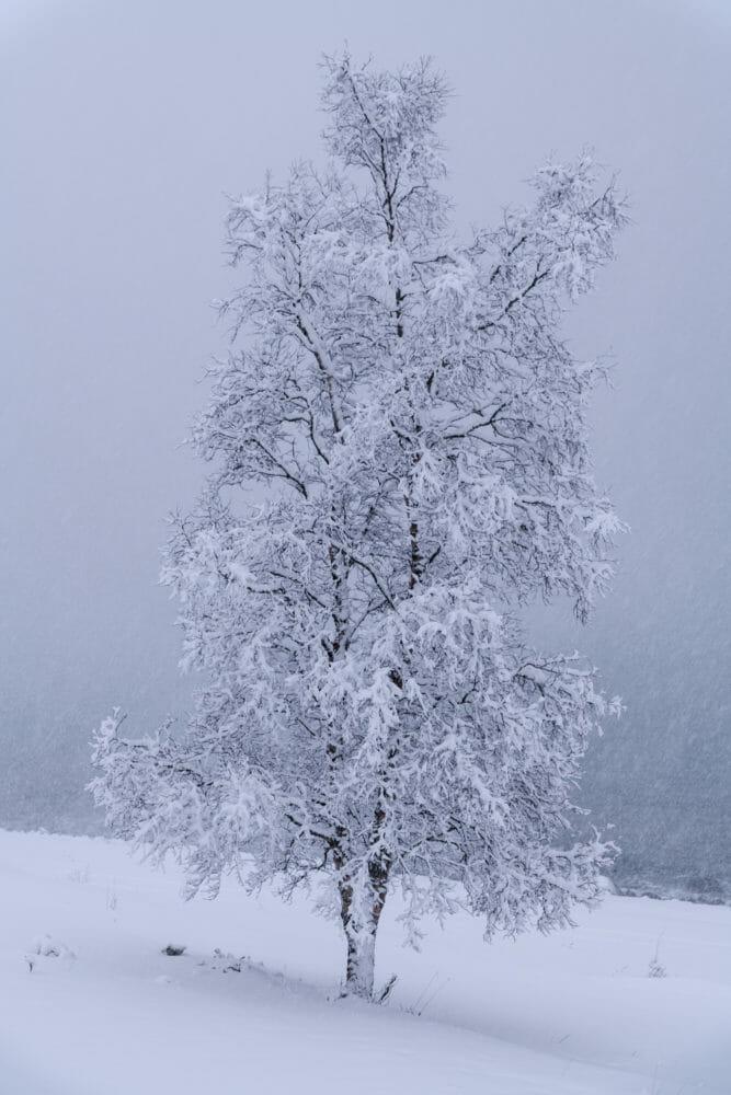 Arbre dans la neige