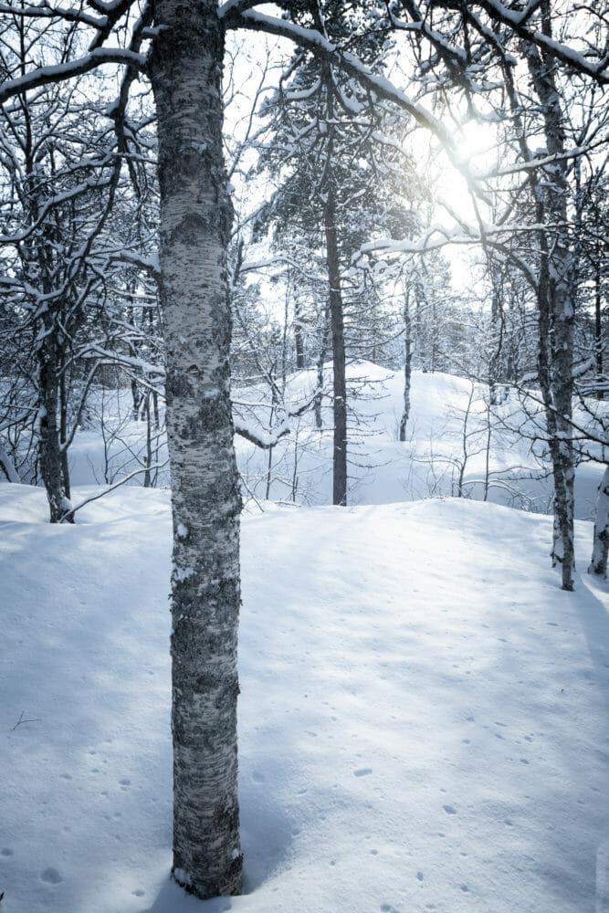 Forêt en norvège du Nord
