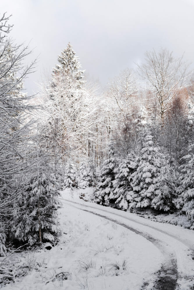 Ardenne sous la neige