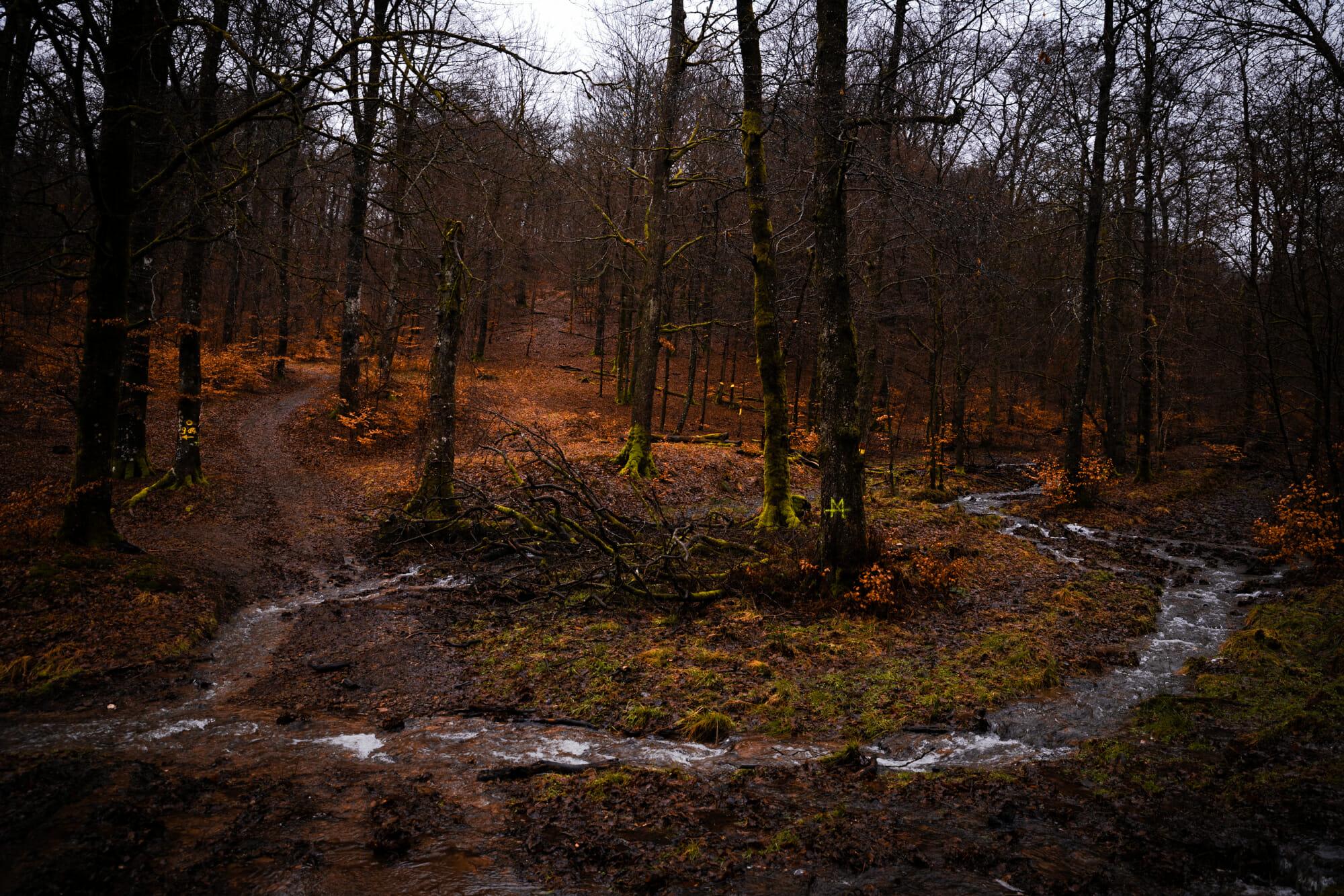 Forêt d'Anlier