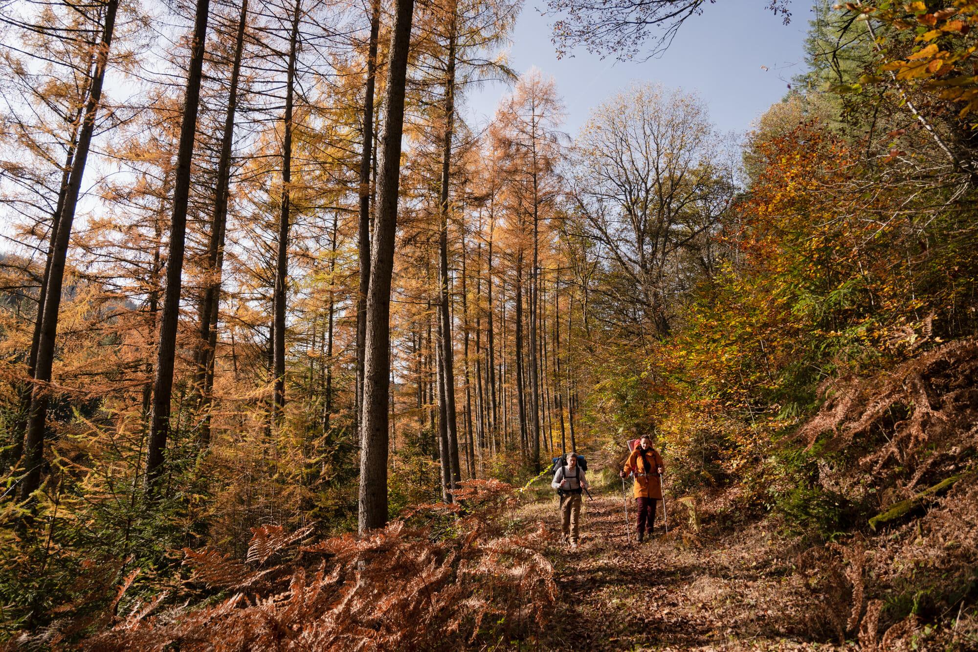 forêt dans la vallée de la Semois