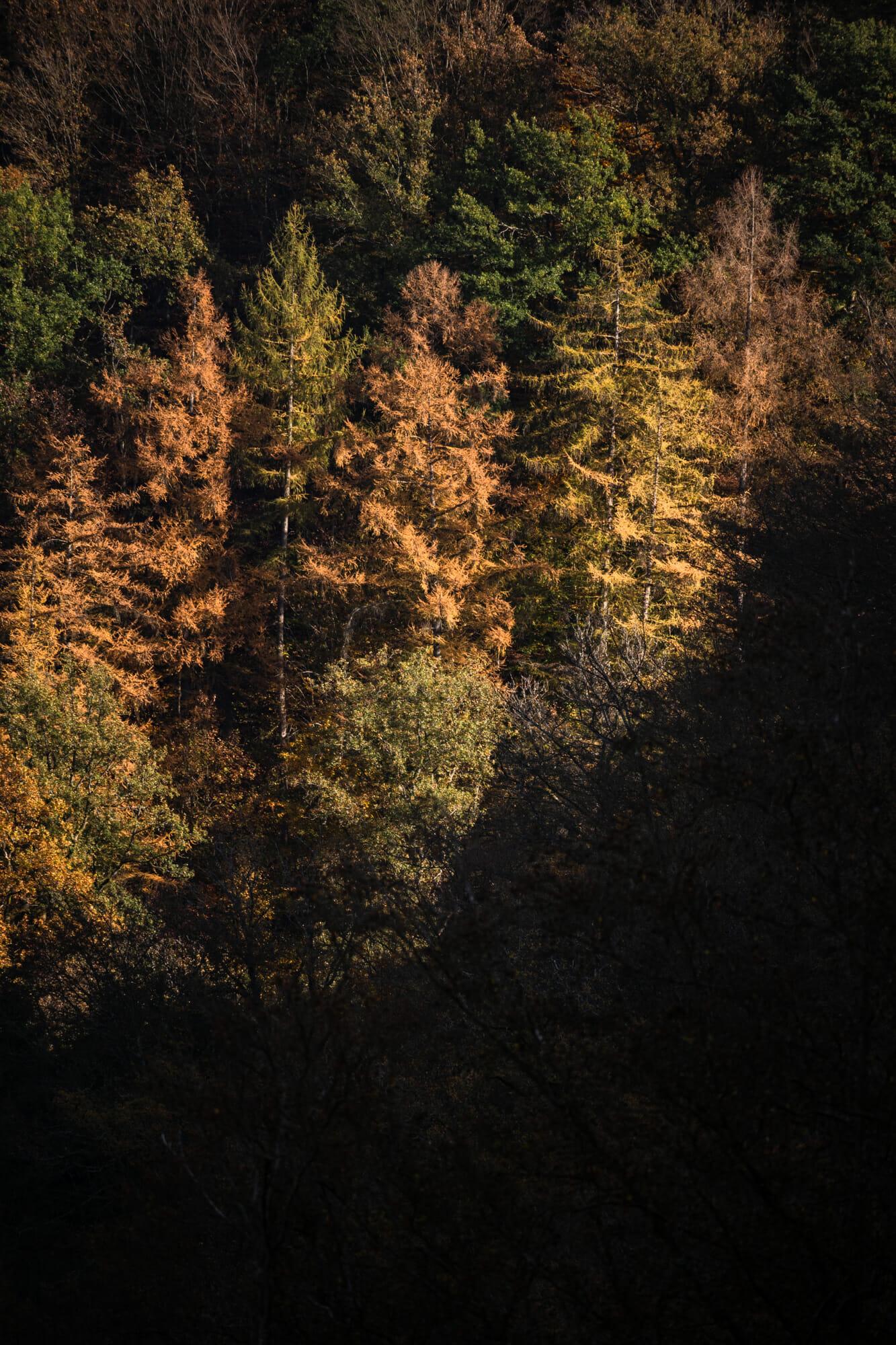 Forêt vallée de la Semois