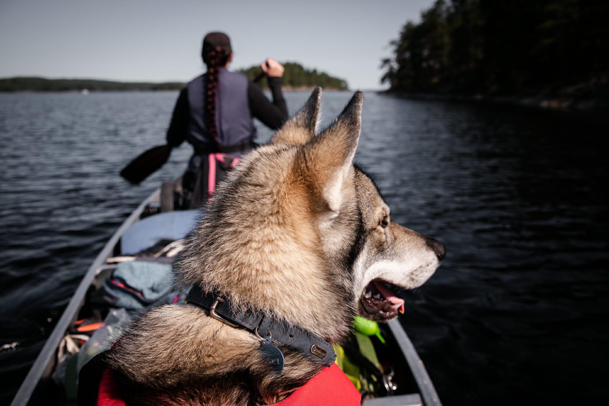 Canoë Trip avec mon chien